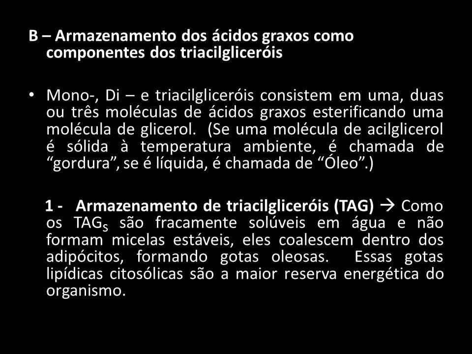 B – Armazenamento dos ácidos graxos como componentes dos triacilgliceróis Mono-, Di – e triacilgliceróis consistem em uma, duas ou três moléculas de á