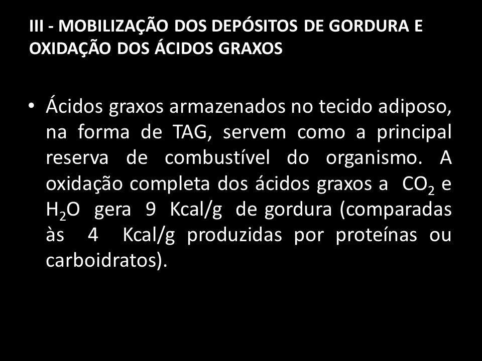 A – Liberação dos ácidos graxos dos TAG S A mobilização dos lipídeos armazenados requer a liberação hidrolítica do ácido graxo e do glicerol a partir dos TAG S.