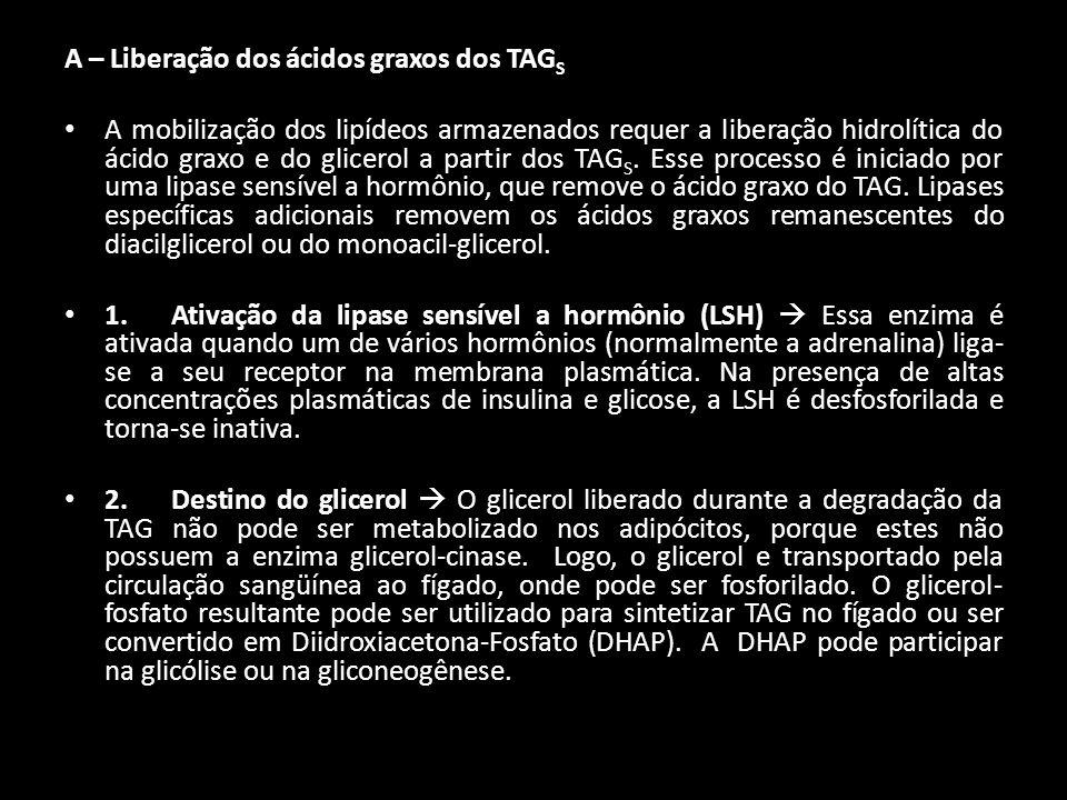 A – Liberação dos ácidos graxos dos TAG S A mobilização dos lipídeos armazenados requer a liberação hidrolítica do ácido graxo e do glicerol a partir
