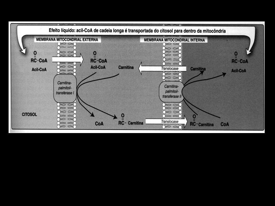IV - CORPOS CETÔNICOS: UM COMBUSTÍVEL ALTERNATIVO PARA AS CÉLULAS A mitocôndria do fígado tem a capacidade de converter acetil-CoA proveniente da β-oxidação de ácidos graxos em corpos cetônicos.