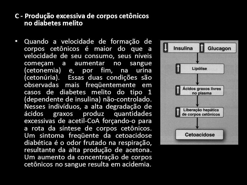 C - Produção excessiva de corpos cetônicos no diabetes melito Quando a velocidade de formação de corpos cetônicos é maior do que a velocidade de seu c