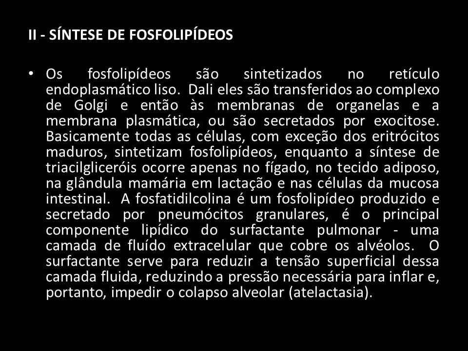 II - SÍNTESE DE FOSFOLIPÍDEOS Os fosfolipídeos são sintetizados no retículo endoplasmático liso. Dali eles são transferidos ao complexo de Golgi e ent