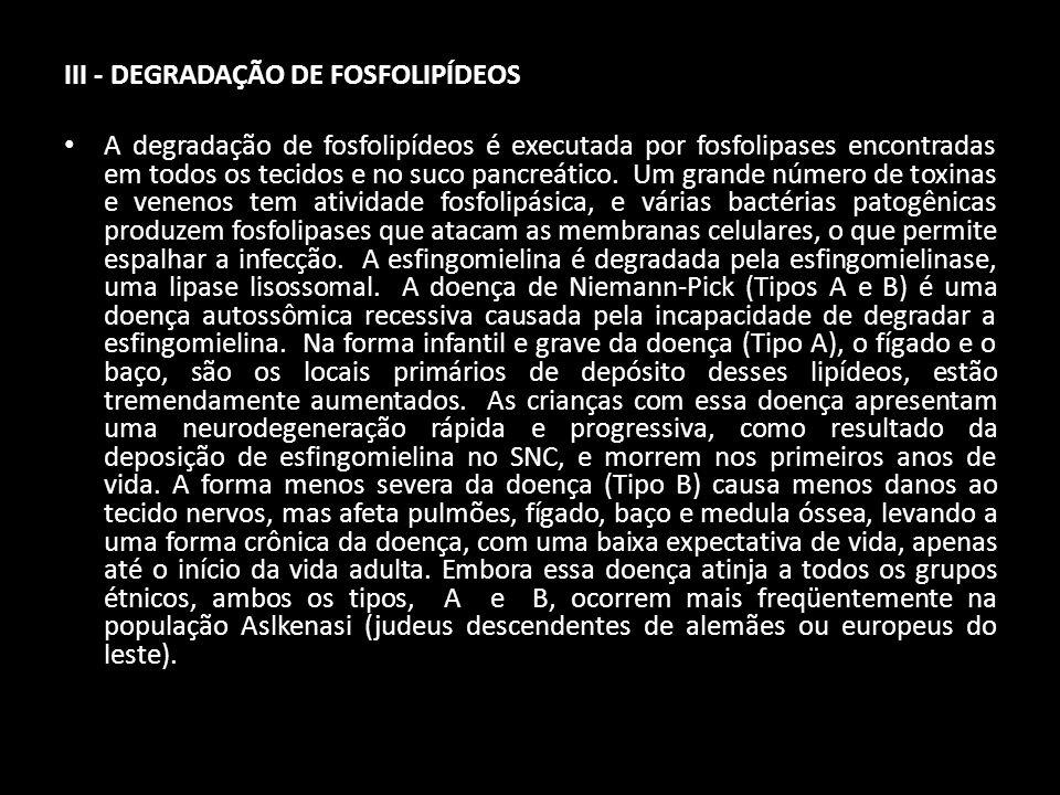 III - DEGRADAÇÃO DE FOSFOLIPÍDEOS A degradação de fosfolipídeos é executada por fosfolipases encontradas em todos os tecidos e no suco pancreático. Um