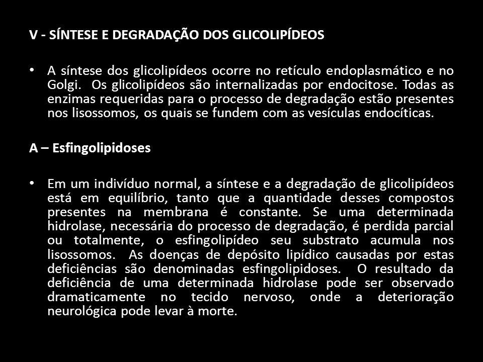 V - SÍNTESE E DEGRADAÇÃO DOS GLICOLIPÍDEOS A síntese dos glicolipídeos ocorre no retículo endoplasmático e no Golgi. Os glicolipídeos são internalizad