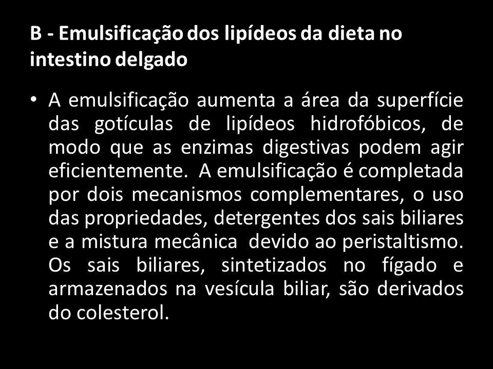 B - Emulsificação dos lipídeos da dieta no intestino delgado A emulsificação aumenta a área da superfície das gotículas de lipídeos hidrofóbicos, de m