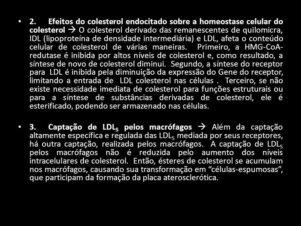 2. Efeitos do colesterol endocitado sobre a homeostase celular do colesterol O colesterol derivado das remanescentes de quilomicra, IDL (lipoproteína