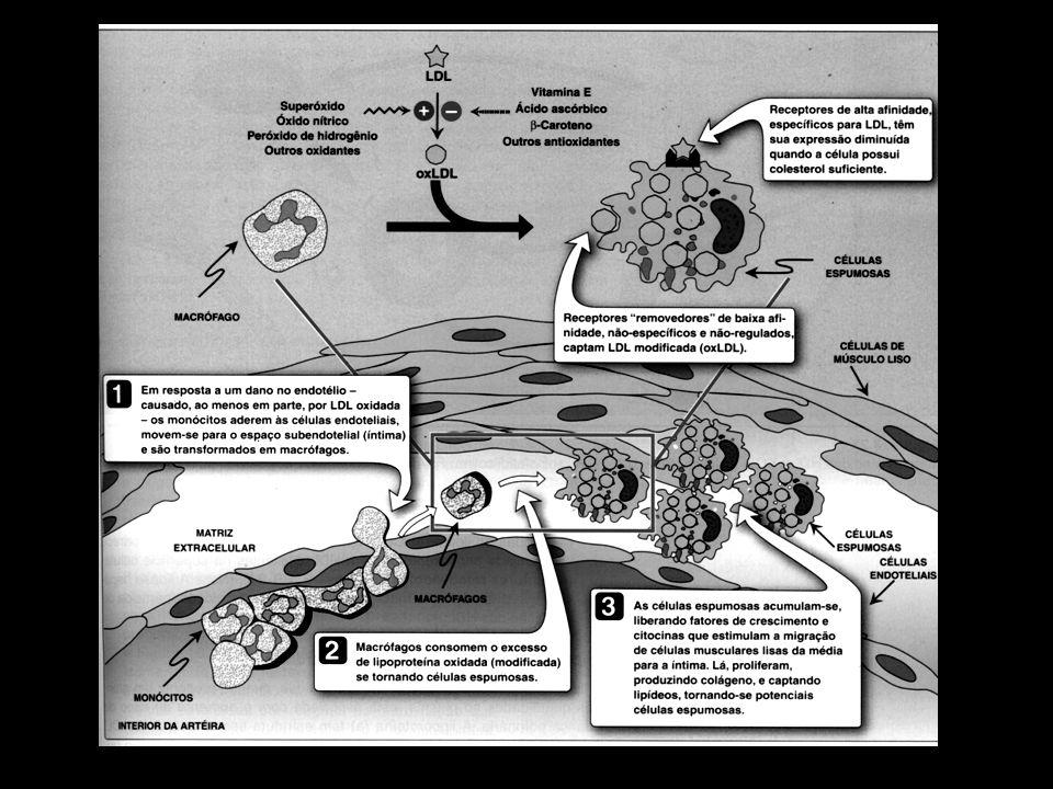 E – Metabolismo das lipoproteínas de alta densidade (HDL S ) As HDL S são uma família heterogênea da lipoproteínas que tem um metabolismo complexo, ainda não completamente entendido.