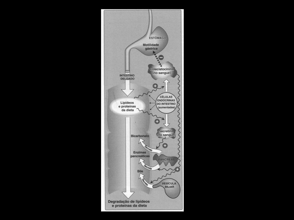 D - Absorção dos lipídeos pelas células da mucosa intestinal (enterócitos) Ácidos graxos livres, colesterol livre e 2-monoacilgliceróis são os principais produtos da degradação dos lipídeos da dieta no jejuno.