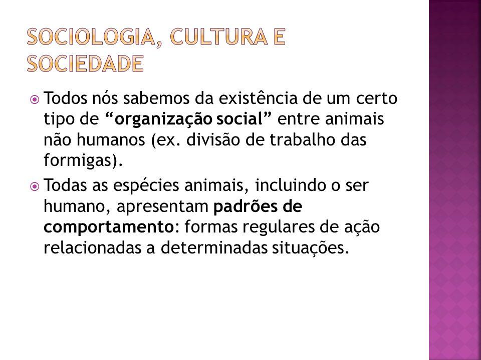 Todos nós sabemos da existência de um certo tipo de organização social entre animais não humanos (ex. divisão de trabalho das formigas). Todas as espé