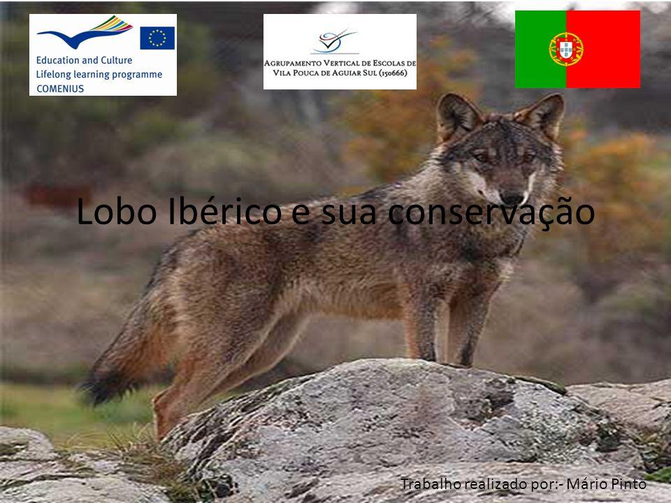 Lobo Ibérico e sua conservação Trabalho realizado por:- Mário Pinto