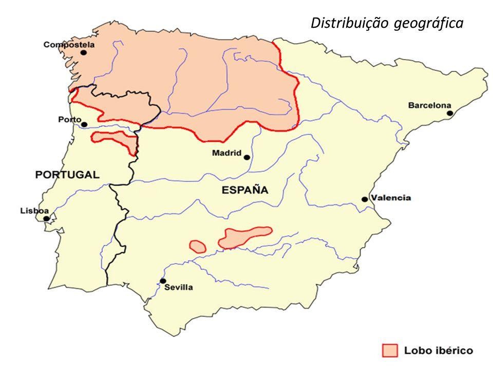 O lobo-ibérico ocupava no início do século XX quase toda a Península Ibérica.