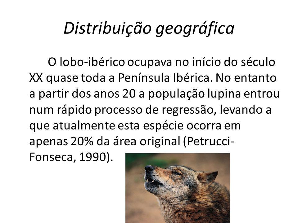 Distribuição geográfica Atualmente, em Portugal, existem 45 alcateias confirmadas a Norte do rio Douro e 6 a Sul.