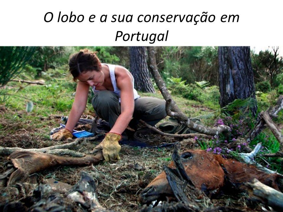 A população do lobo em Portugal é constituída por duas subpopulações: