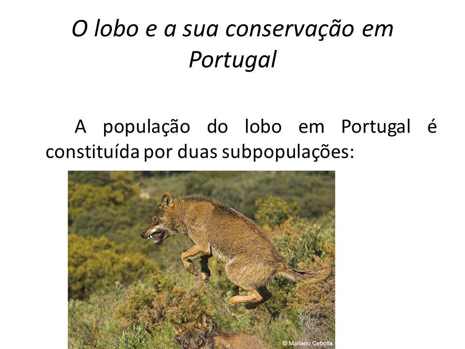 O lobo e a sua conservação em Portugal Uma a norte do rio Douro em continuidade com a população espanhola