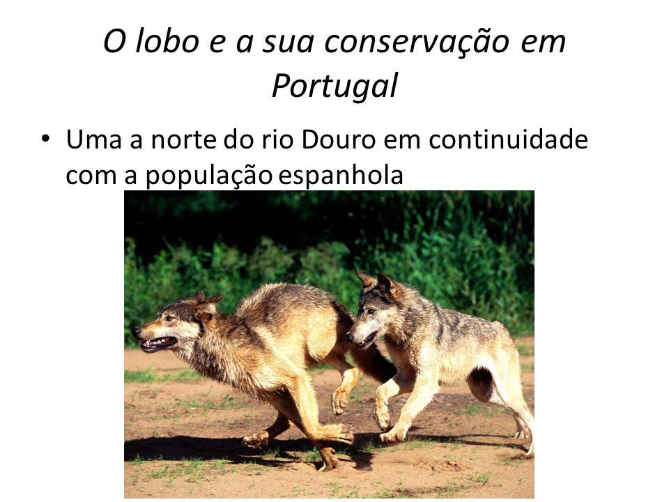 O lobo e a sua conservação em Portugal E outra que ocorre a sul deste mesmo rio, que está aparentemente isolada da restante população ibérica e que apresenta um elevado nível de fragmentação (Pimenta et al, 2005).