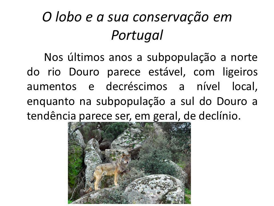 O lobo e a sua conservação em Portugal Nos últimos anos a subpopulação a norte do rio Douro parece estável, com ligeiros aumentos e decréscimos a níve