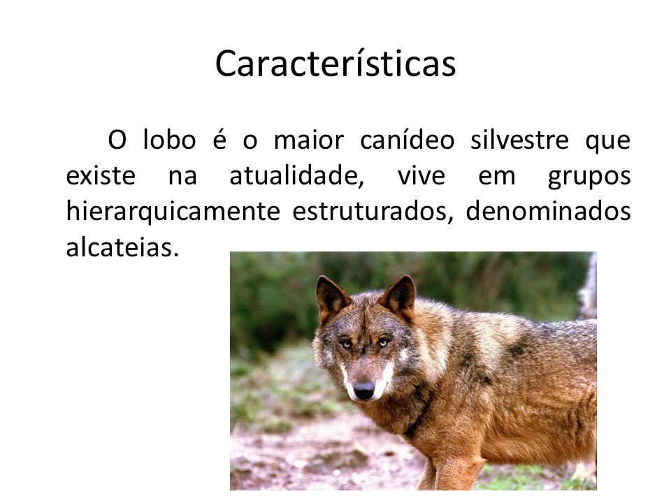 Características Estas são constituídas pelo par reprodutor, alguns adultos e as crias das mais recentes épocas de criação.