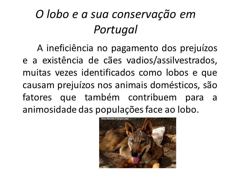 O lobo e a sua conservação em Portugal A ineficiência no pagamento dos prejuízos e a existência de cães vadios/assilvestrados, muitas vezes identifica