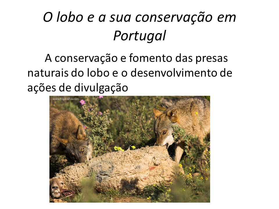 O lobo e a sua conservação em Portugal A conservação e fomento das presas naturais do lobo e o desenvolvimento de ações de divulgação