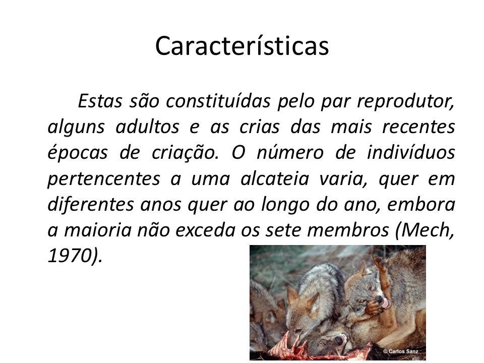 Características Estas são constituídas pelo par reprodutor, alguns adultos e as crias das mais recentes épocas de criação. O número de indivíduos pert