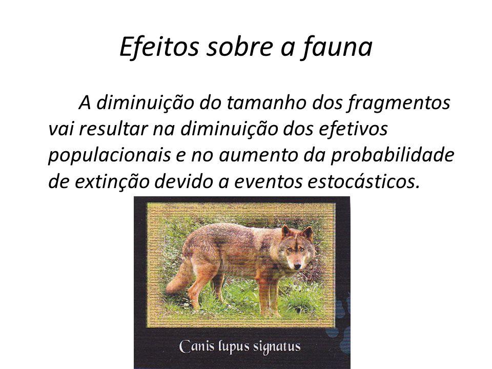 Efeitos sobre a fauna A diminuição do tamanho dos fragmentos vai resultar na diminuição dos efetivos populacionais e no aumento da probabilidade de ex