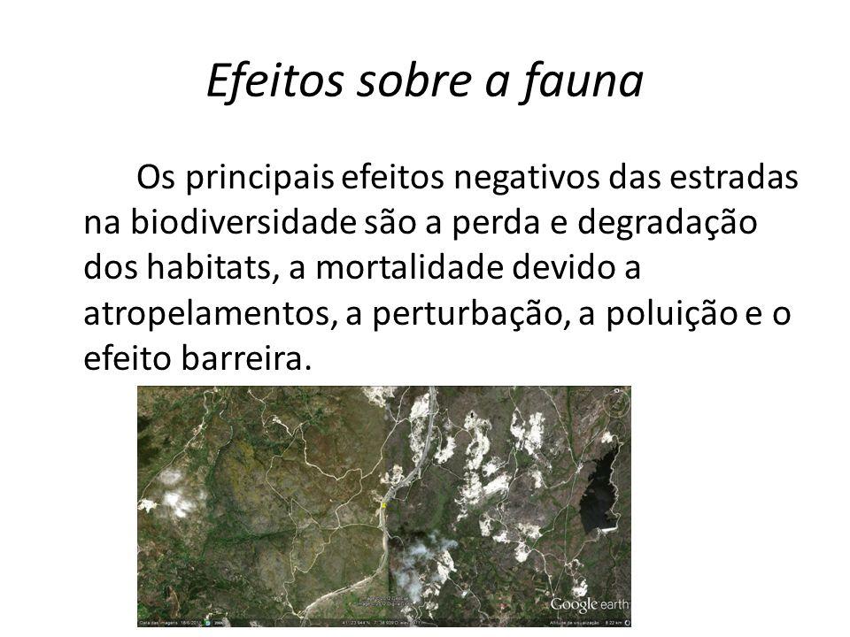 Efeitos sobre a fauna Os principais efeitos negativos das estradas na biodiversidade são a perda e degradação dos habitats, a mortalidade devido a atr
