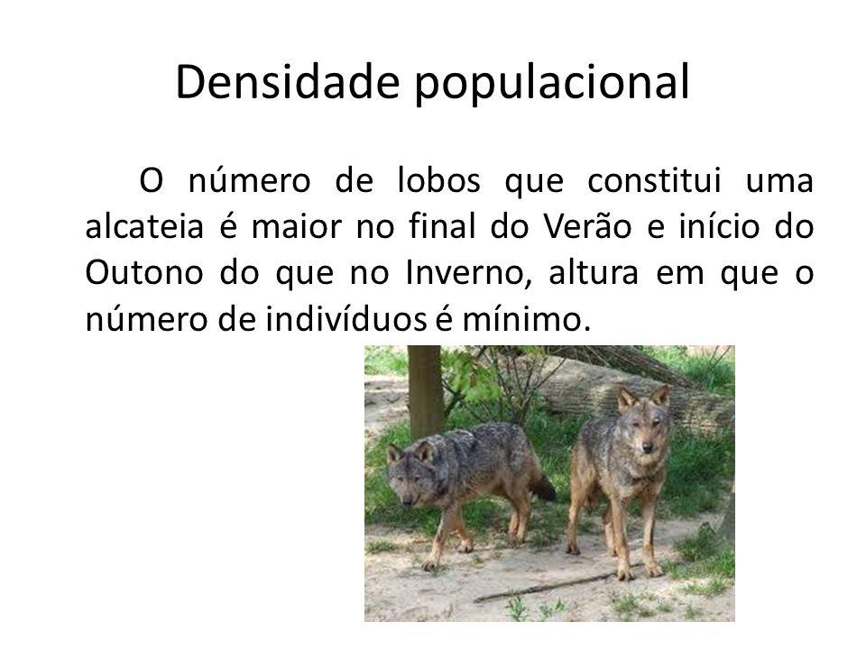 Densidade populacional O número de lobos que constitui uma alcateia é maior no final do Verão e início do Outono do que no Inverno, altura em que o nú