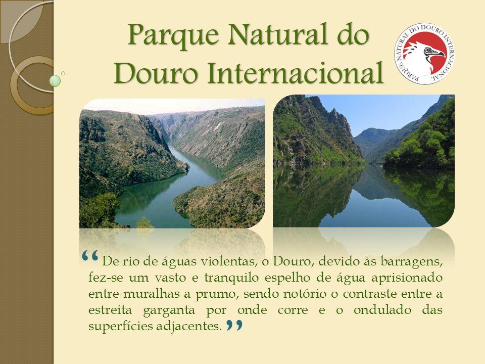 Parque Natural do Douro Internacional De rio de águas violentas, o Douro, devido às barragens, fez-se um vasto e tranquilo espelho de água aprisionado