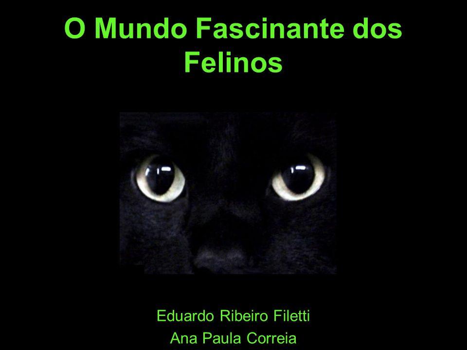 O Mundo Fascinante dos Felinos Eduardo Ribeiro Filetti Ana Paula Correia