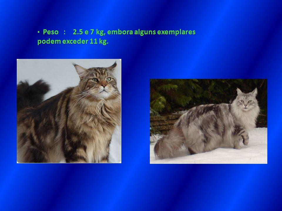 Peso : 2.5 e 7 kg, embora alguns exemplares podem exceder 11 kg. Peso : 2.5 e 7 kg, embora alguns exemplares podem exceder 11 kg.