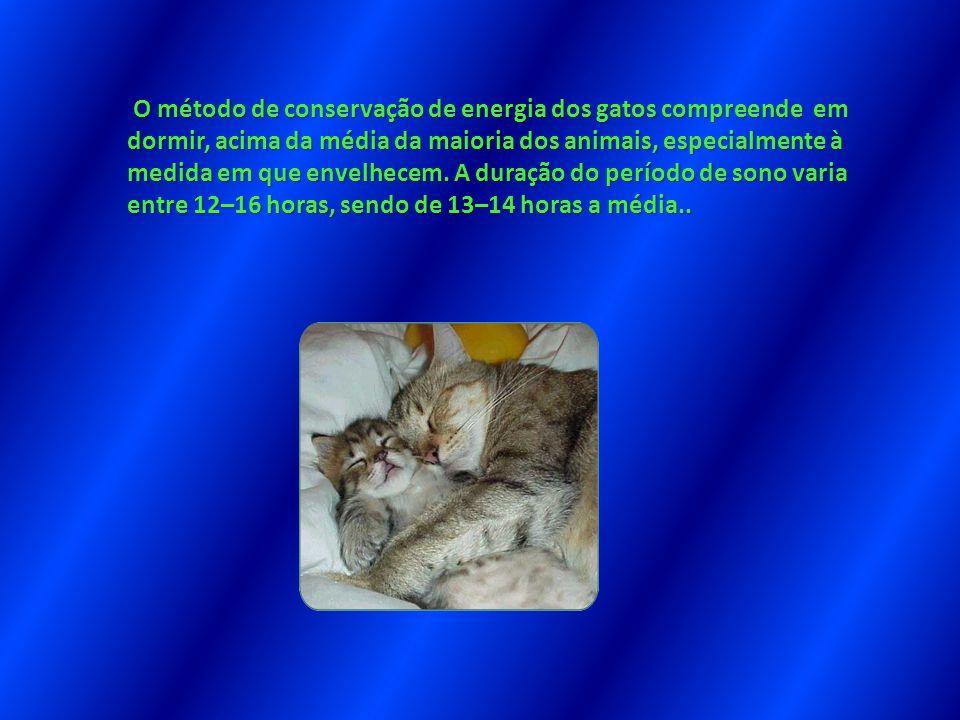O método de conservação de energia dos gatos compreende em dormir, acima da média da maioria dos animais, especialmente à medida em que envelhecem. A