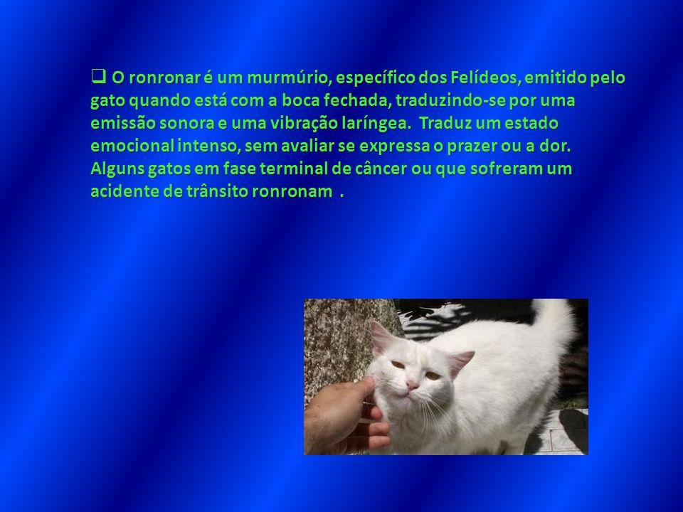 O ronronar é um murmúrio, específico dos Felídeos, emitido pelo gato quando está com a boca fechada, traduzindo-se por uma emissão sonora e uma vibraç