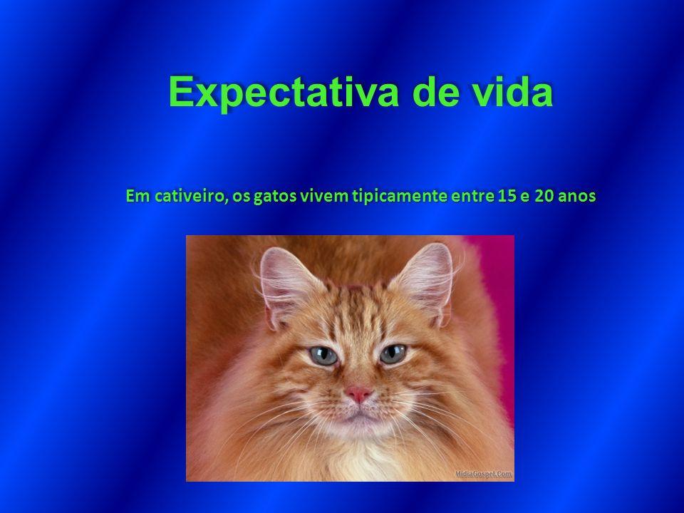 Expectativa de vida Em cativeiro, os gatos vivem tipicamente entre 15 e 20 anos Expectativa de vida Em cativeiro, os gatos vivem tipicamente entre 15