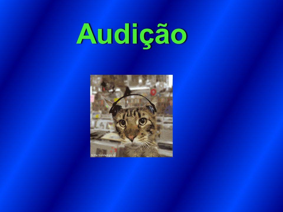 Audição Audição