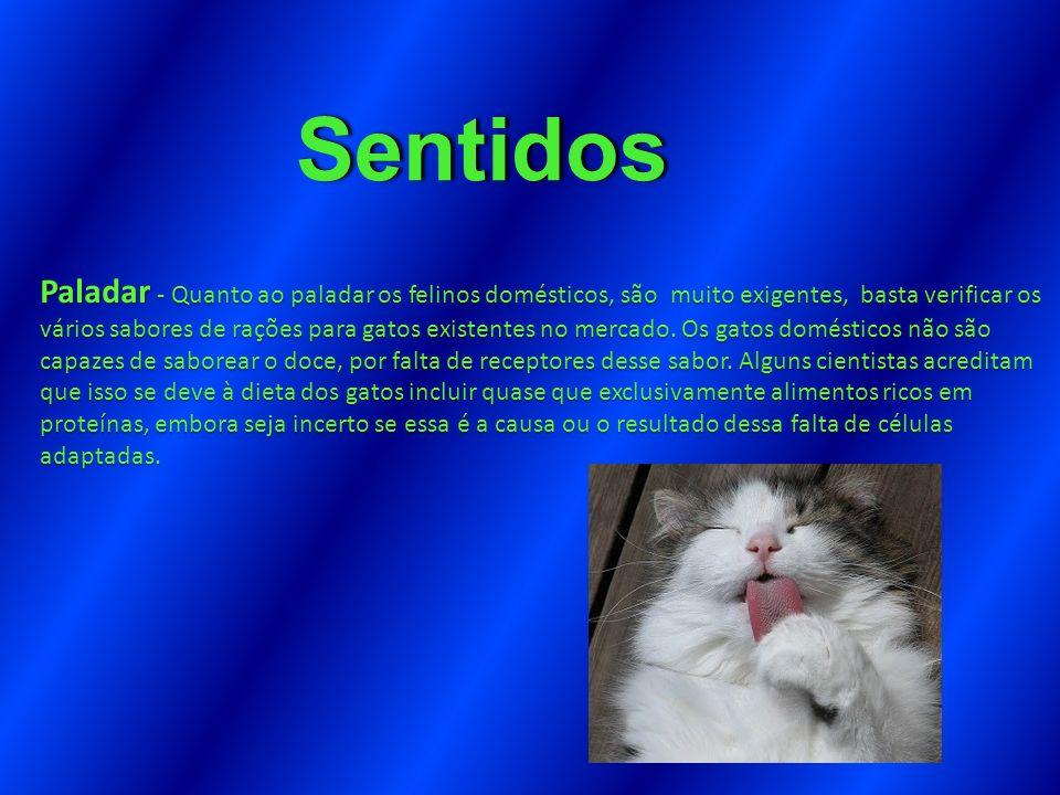 Sentidos Paladar - Quanto ao paladar os felinos domésticos, são muito exigentes, basta verificar os vários sabores de rações para gatos existentes no