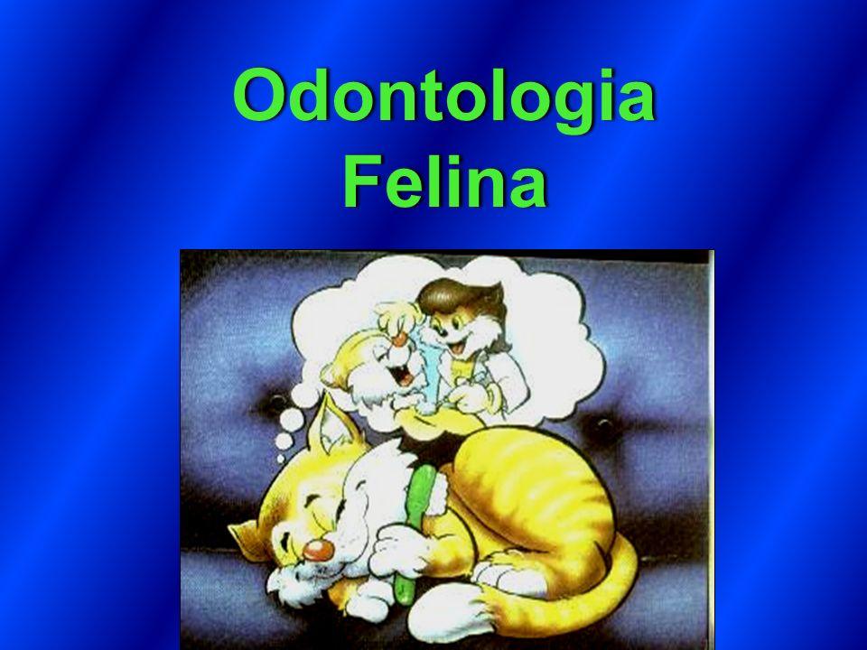 feito em Odontologia Felina