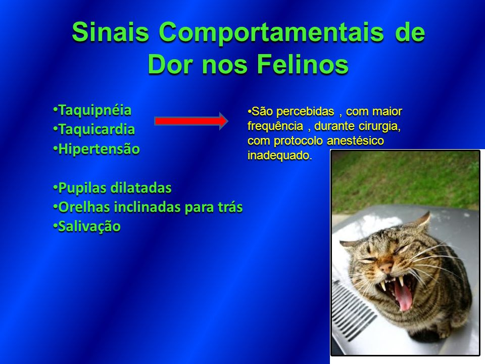 Sinais Comportamentais de Dor nos Felinos Taquipnéia Taquipnéia Taquicardia Taquicardia Hipertensão Hipertensão Pupilas dilatadas Pupilas dilatadas Or
