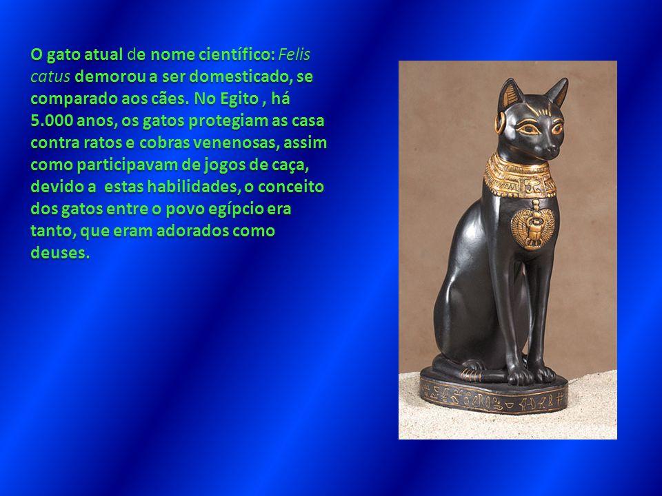 O gato atual de nome científico: Felis catus demorou a ser domesticado, se comparado aos cães. No Egito, há 5.000 anos, os gatos protegiam as casa con