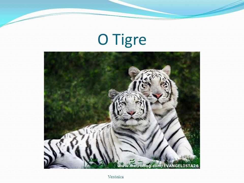 O Tigre Verónica