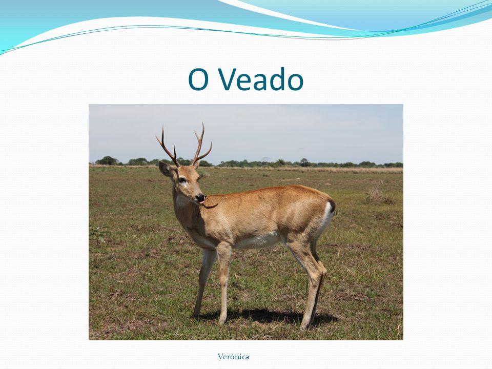 O Veado O veado é um mamífero da ordem dos artiodáctilos pertencente, em senso estrito, à família Cervidae.