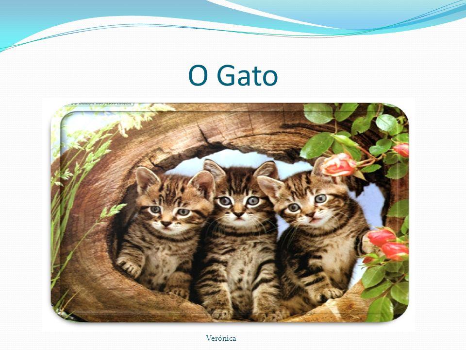 O Gato O gato é um dos animais de companhia mais fáceis de manter, razão pela qual, na maioria dos países industrializados, vai ganhando lugar ao cão, que exige outra disponibilidade.