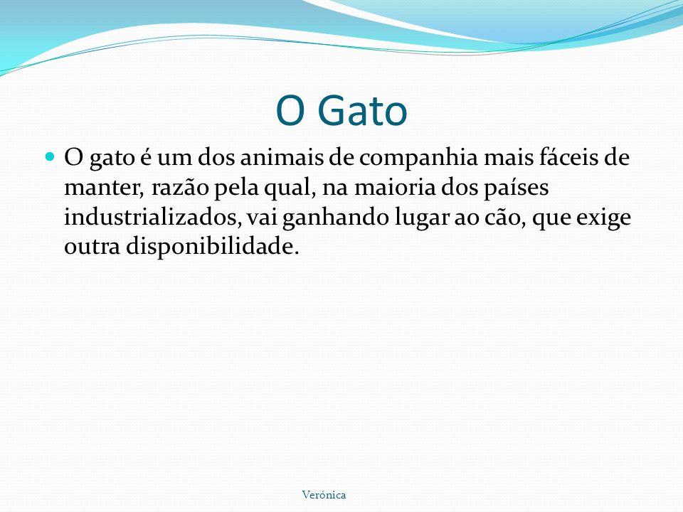 O Gato O gato é um dos animais de companhia mais fáceis de manter, razão pela qual, na maioria dos países industrializados, vai ganhando lugar ao cão,