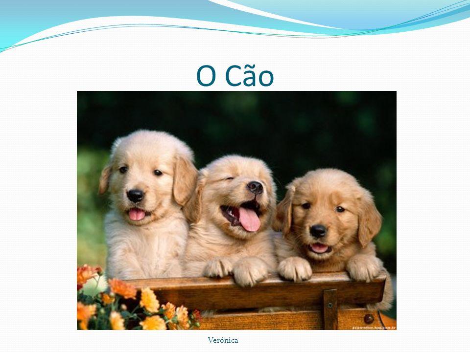 O Cão Os Cães são nossos amigos e tomam conta da casa todo o dia em enquanto os donos estão fora.