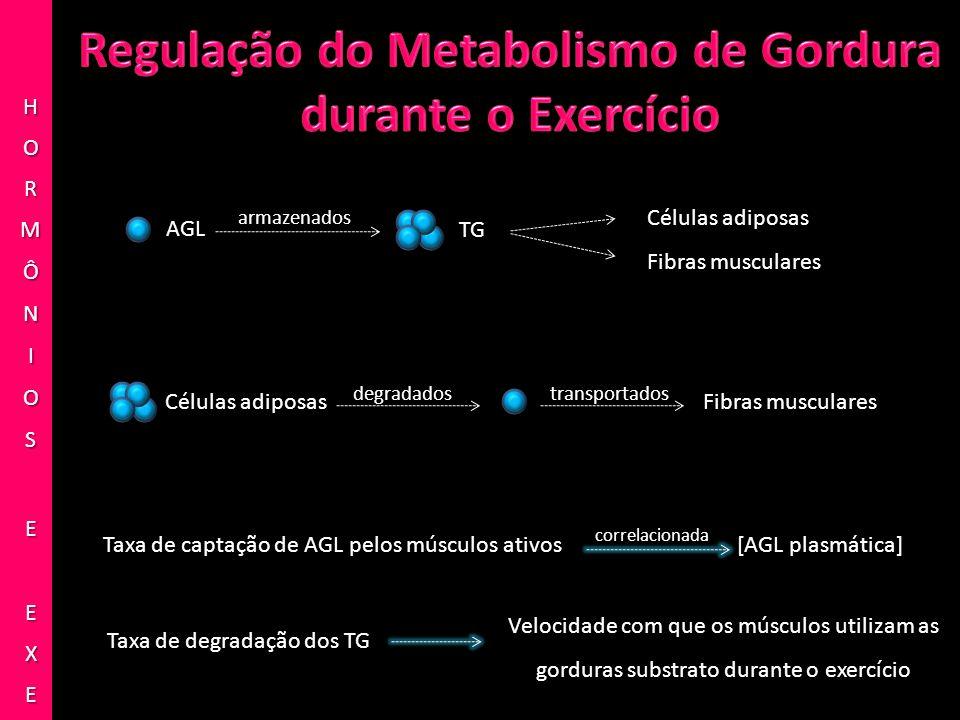 TG AGL Células adiposas Fibras musculares Células adiposasFibras musculares Taxa de captação de AGL pelos músculos ativos[AGL plasmática] Taxa de degr