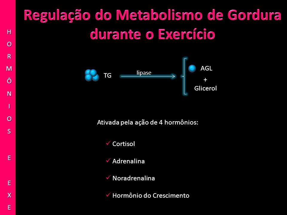 TG AGL lipase + Glicerol Ativada pela ação de 4 hormônios: Cortisol Adrenalina Noradrenalina Hormônio do Crescimento