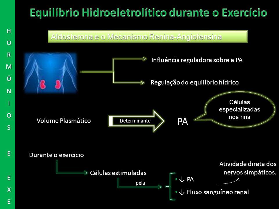Aldosterona e o Mecanismo Renina-Angiotensina Influência reguladora sobre a PA Regulação do equilíbrio hídrico Volume Plasmático PA Determinante Célul