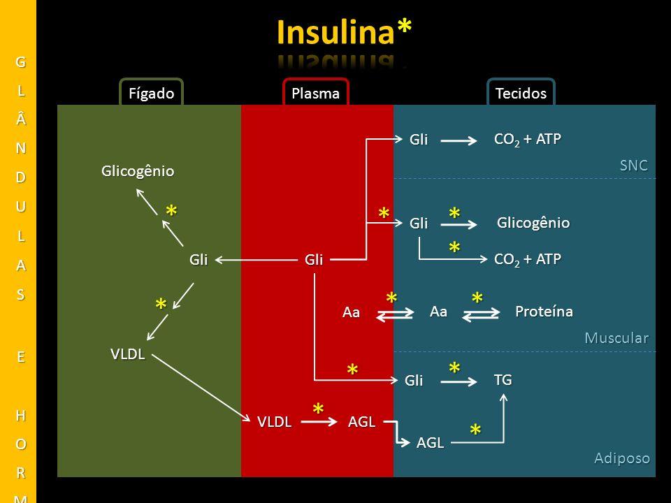 FígadoPlasmaTecidos Glicogênio Gli VLDL * * VLDLAGL * Gli Gli Gli Gli SNC Muscular Adiposo CO 2 + ATP * Glicogênio * Proteína ** Aa Aa TG * AGL * * *