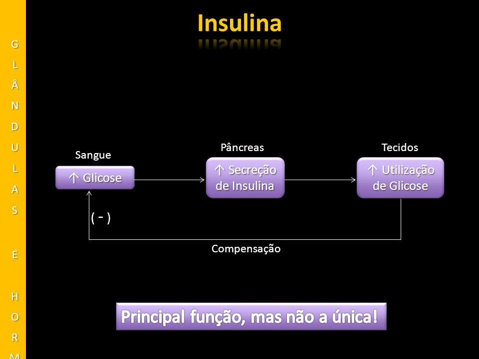 Hormônio peptídico secretado quando a [glicose] plasmática cai abaixo dos valores normais Efeitos opostos à insulina FunçãoFunção [glicose] sanguínea Degradação do glicogênio hepático em glicose (glicogenólise); Gliconeogênese