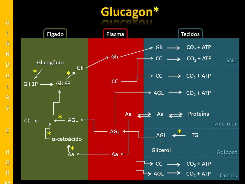 FígadoPlasmaTecidos Glicogênio Gli * AGL Gli Gli AGL+Glicerol SNC Muscular Adiposo CO 2 + ATP ProteínaAa TG * Gli 6P Gli 1P * CO 2 + ATP CC AGLCO 2 +