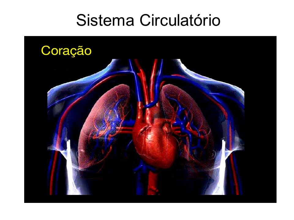Controle dos batimentos cardíacos As células do nódulo sinoatrial emitem sinais elétricos que se propagam pelas células do átrio, provocando sua contração (sístole).